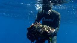Il meglio di... I vagabondi della pesca in apnea. 1a parte