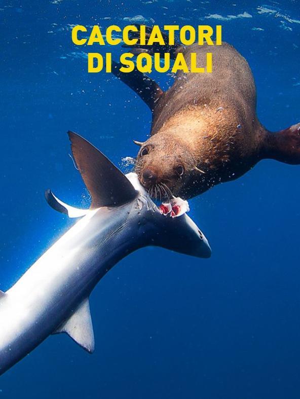 Cacciatori di squali