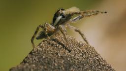 Ragni e scorpioni