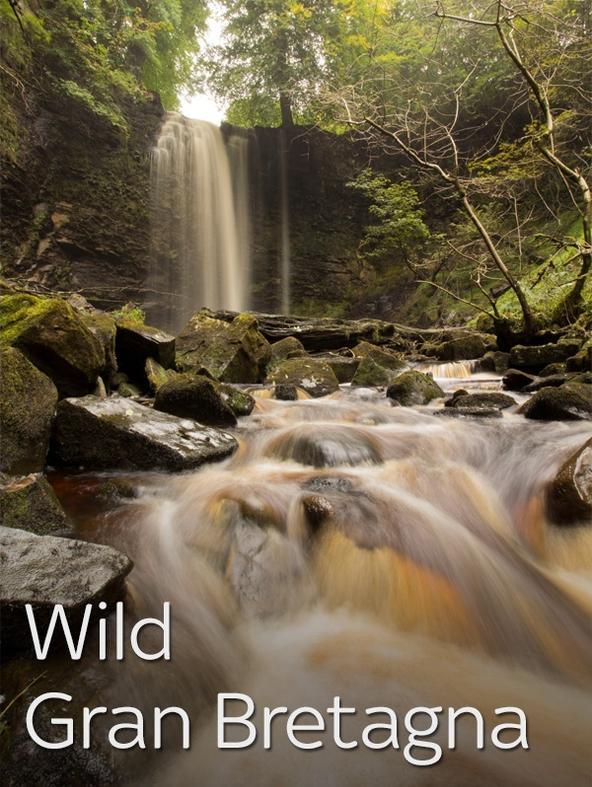 Wild Gran Bretagna -  -