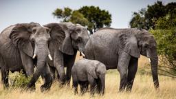 Botswana: cacciatori e prede