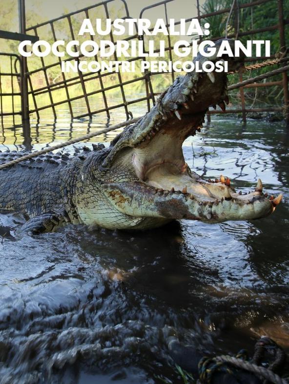 Australia: coccodrilli giganti...