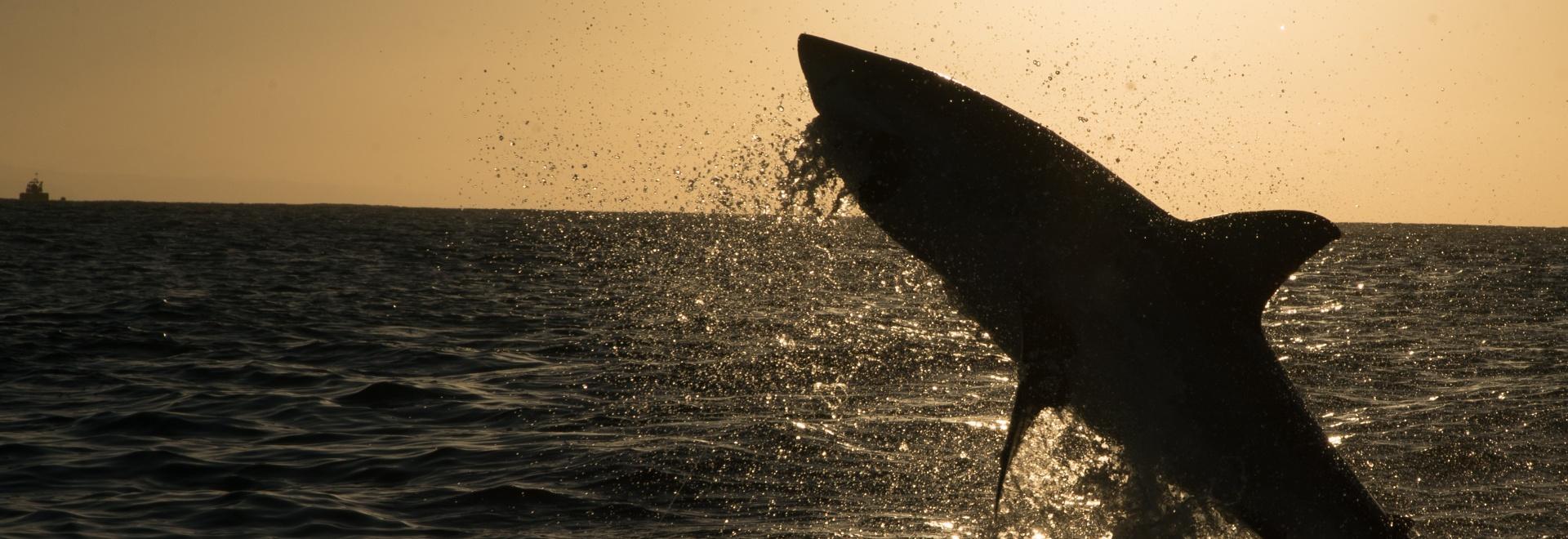 La legge degli squali