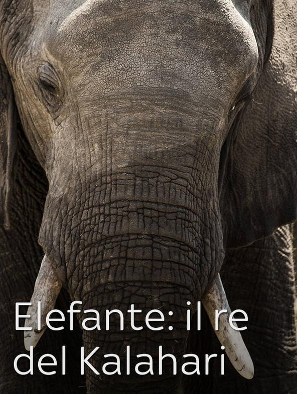 Elefante: il re del Kalahari