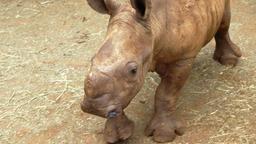 Tigri, rinoceronti e talpe
