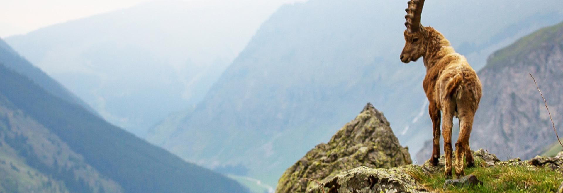 In vetta alle Alpi