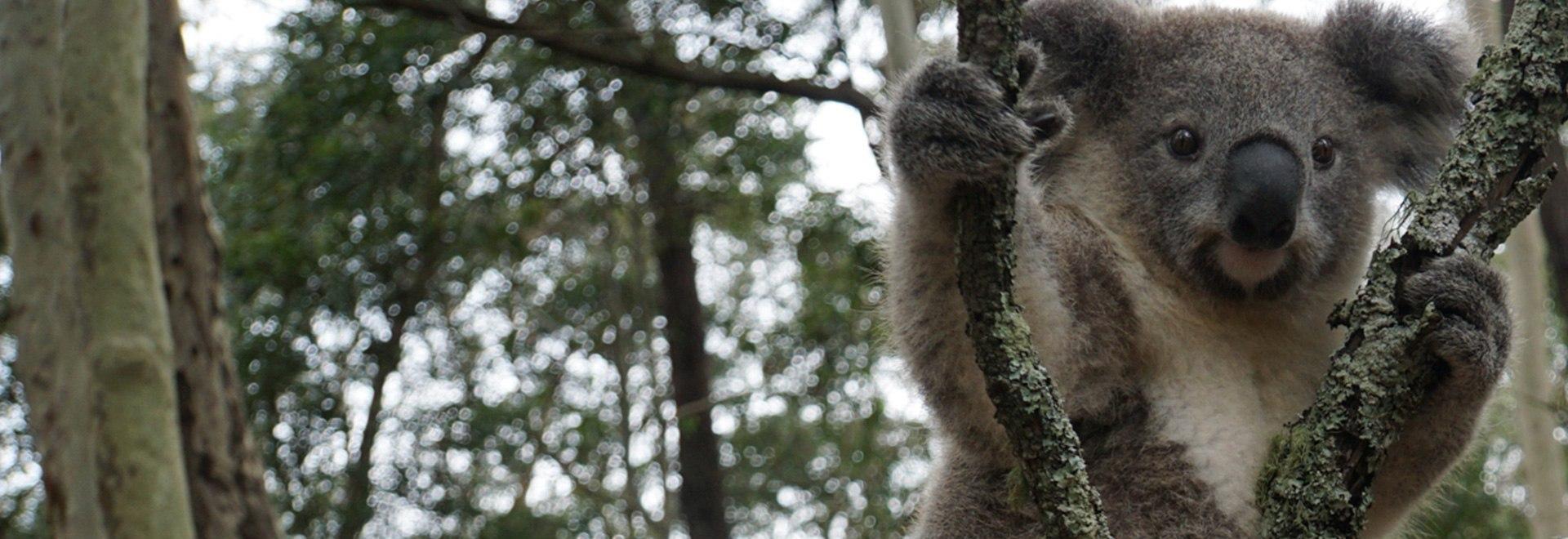 Wild Frank Australia