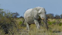 Etosha: la grande distesa bianca