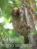 Borneo: regno segreto