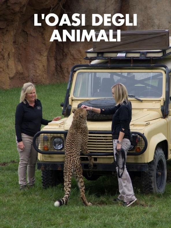 Un cucciolo di okapi