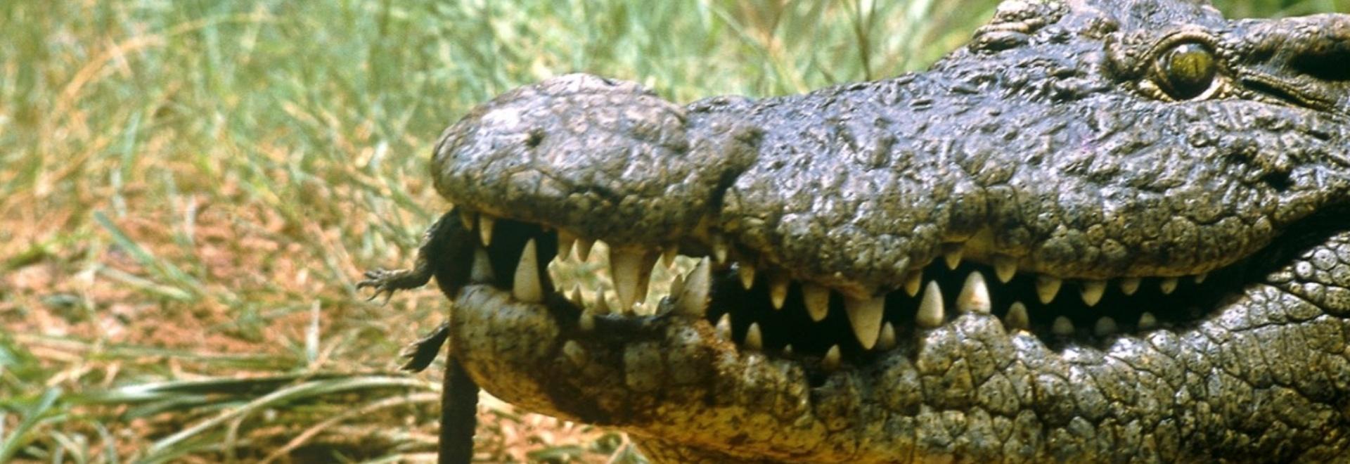 Il territorio dei coccodrilli