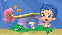Un tuffo nel blu con i delfini