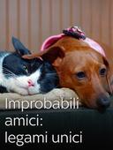 Improbabili amici: legami unici