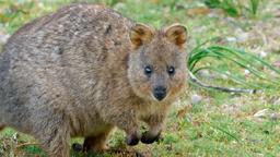 La vita segreta dei piccoli marsupiali