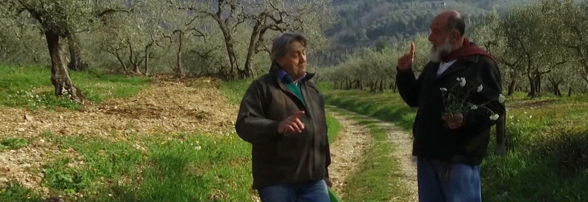 Giorgione: orto e cucina - Erbe spontanee