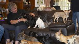41 cani nella mia casa