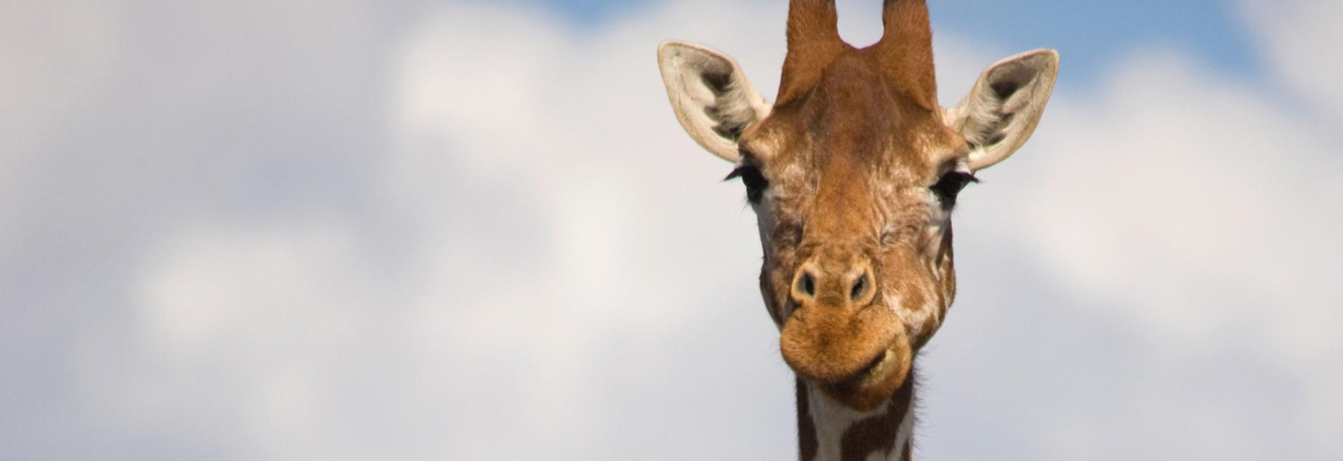 Gli animali più buffi del web