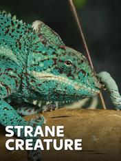 S1 Ep3 - Strane creature