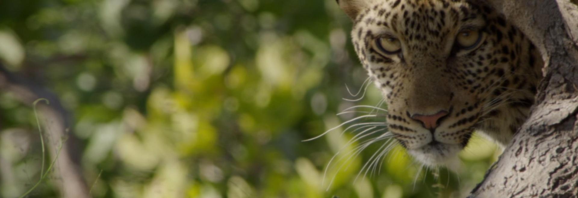 Gli animali più pericolosi: Africa