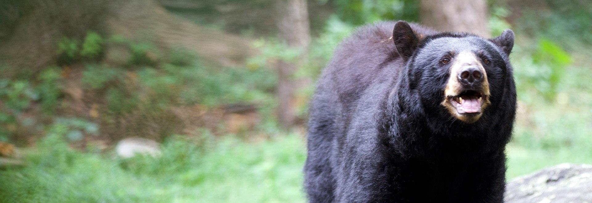 L'oasi degli animali: pronto intervento