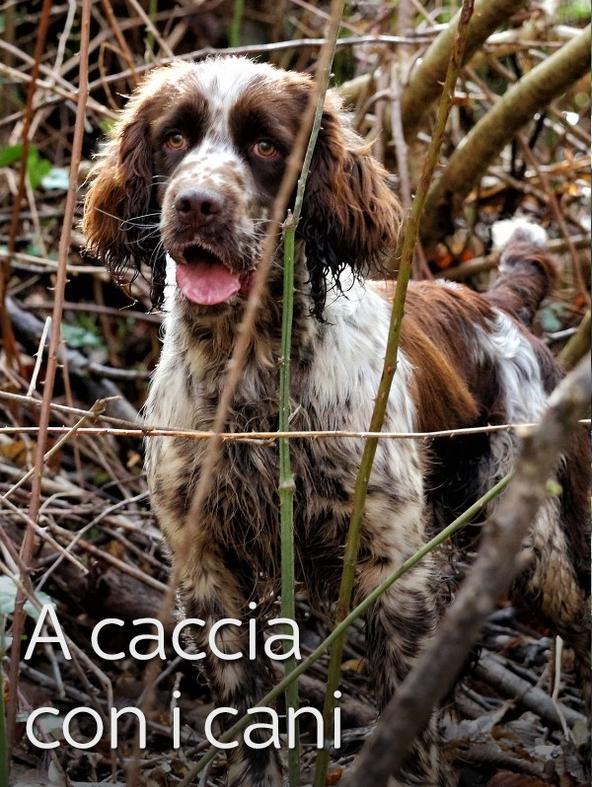 A caccia con i cani