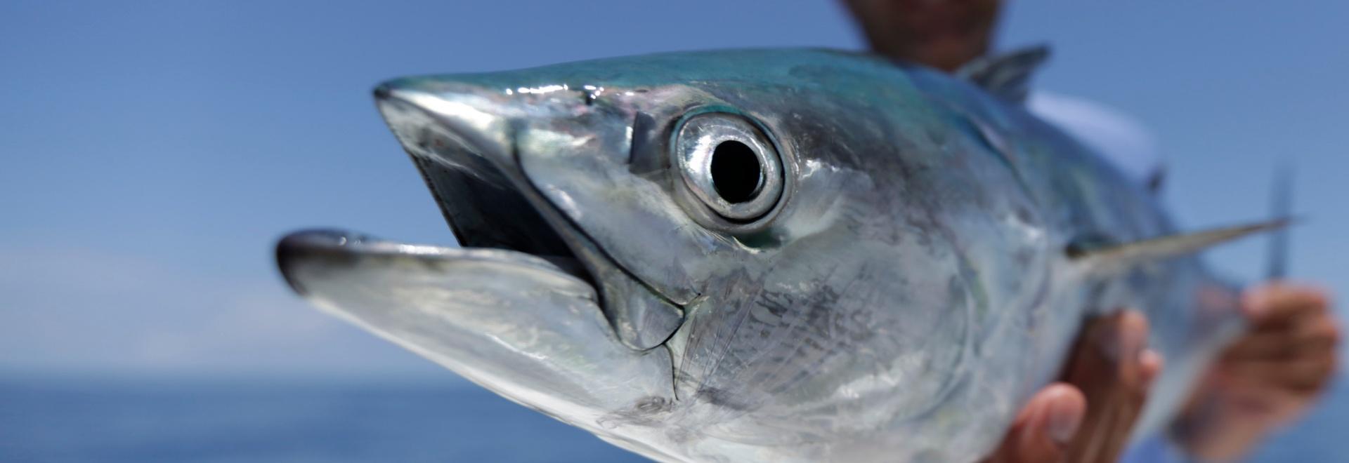Monster Fish: pesci giganti