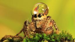 Invasione del ragno
