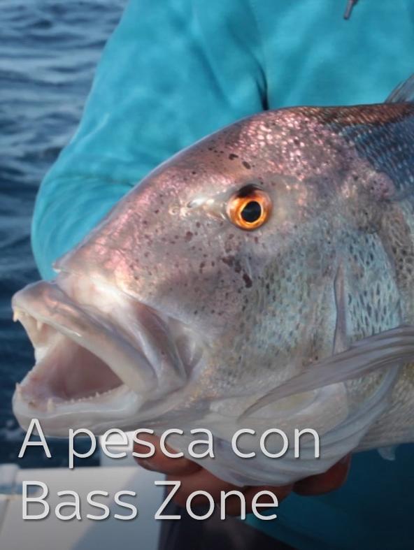 A pesca con Bass Zone 2