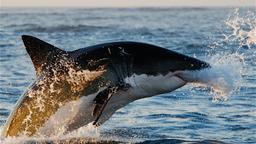 Predatori dei mari