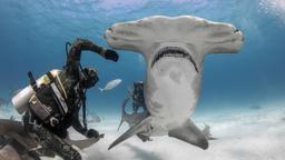 Uomo vs. squalo