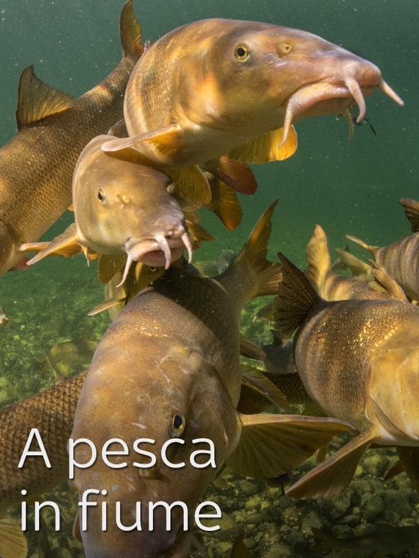 A pesca in fiume 3