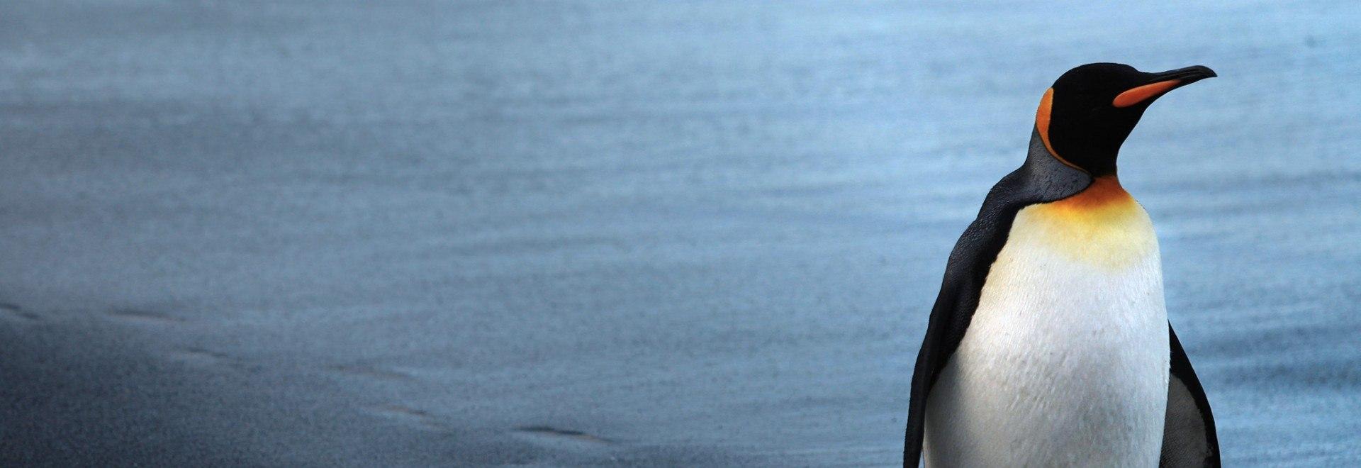 David Attenborough - Il pinguino reale