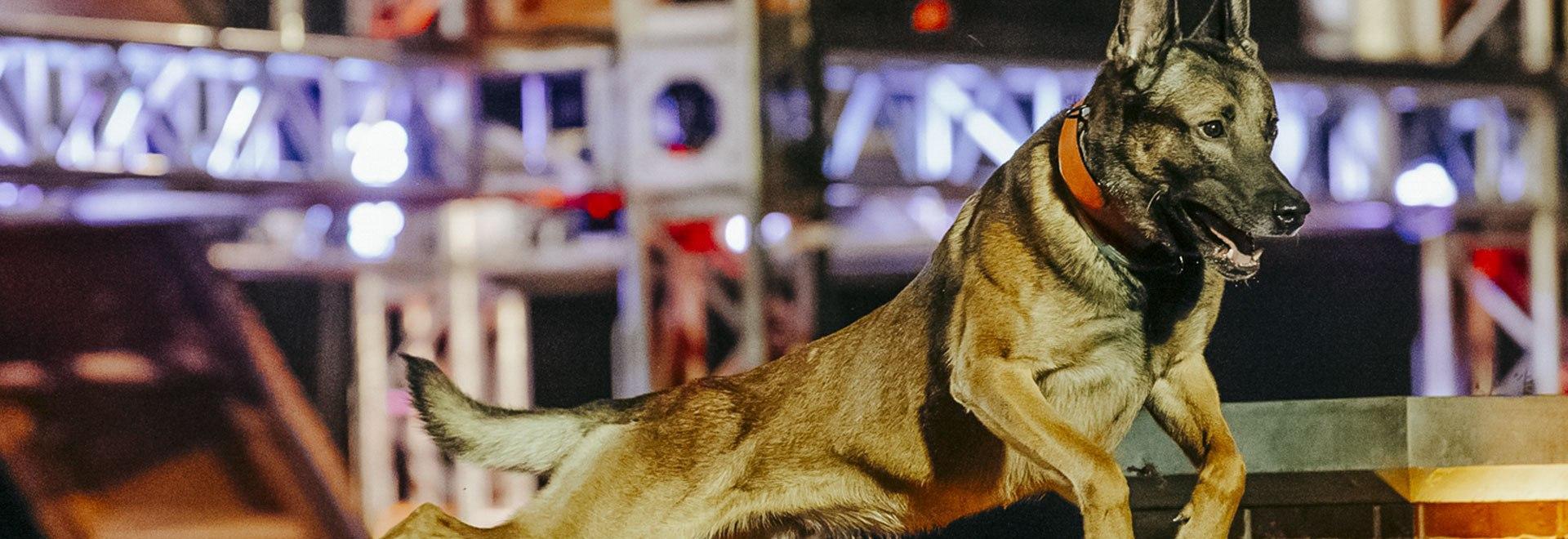 Top Dog: Olimpiadi a 4 zampe