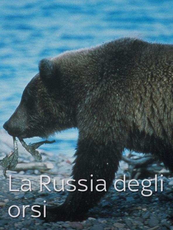 La Russia degli orsi