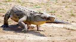 I pesi massimi del regno animale