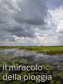 Il miracolo della pioggia