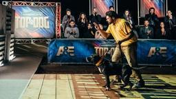 Fur Missile vs. Murphy Lay
