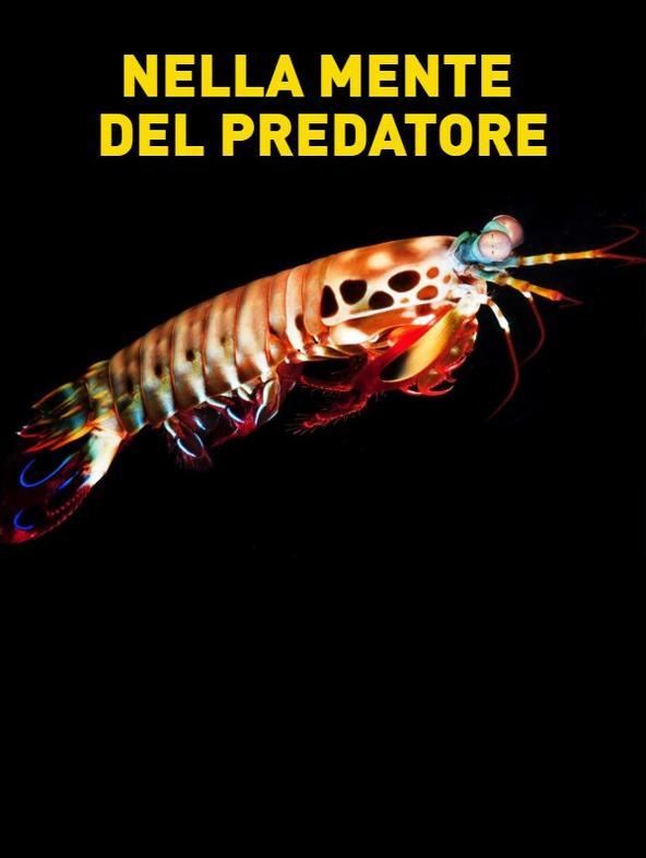 S1 Ep3 - Nella mente del predatore