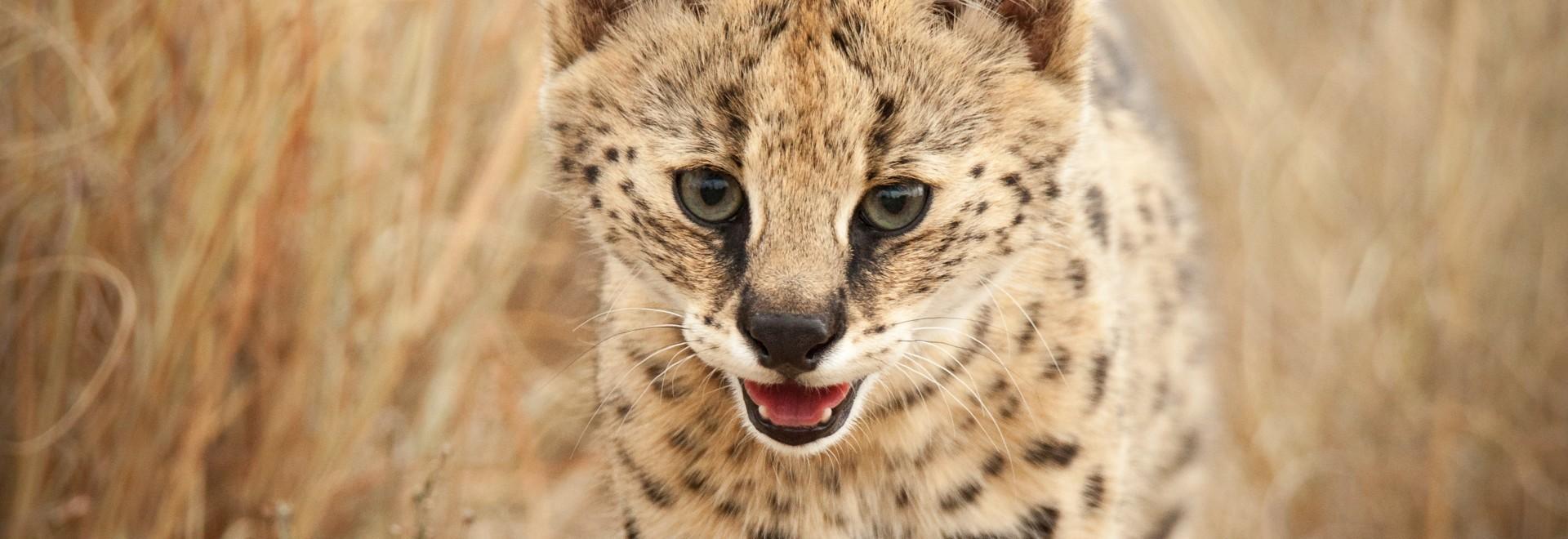 Sud Africa: la culla dei predatori