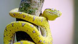 La vita segreta dei serpenti