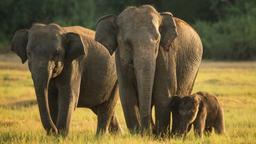 Vita da elefante