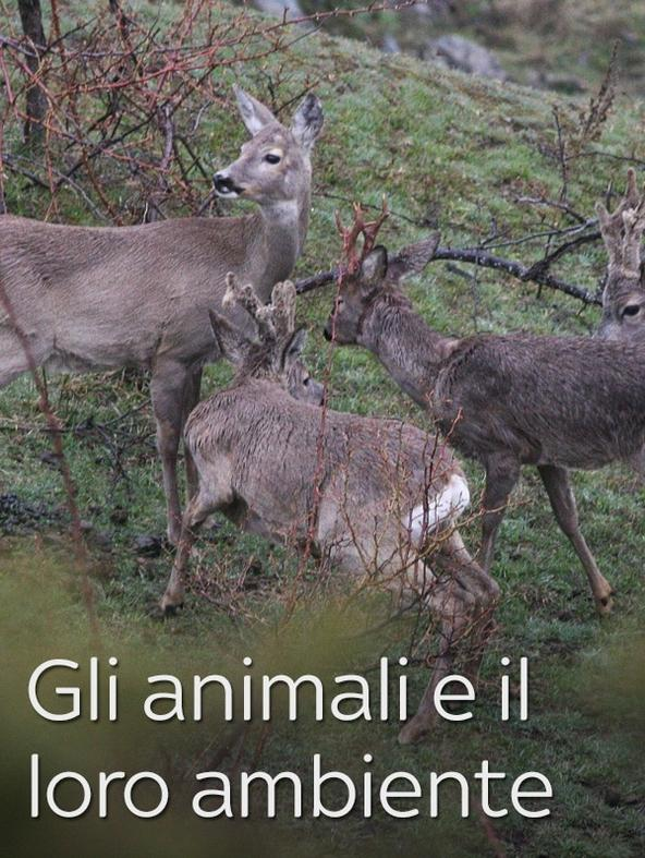 Gli animali e il loro ambiente