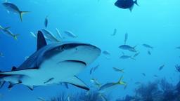 Bimini Sharklab