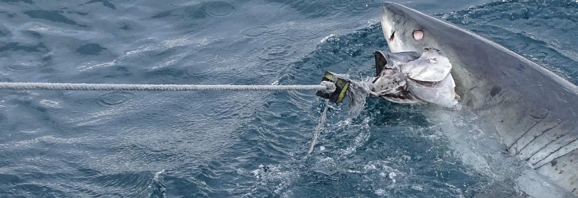Gli attacchi degli squali