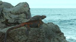 Galapagos: the edge of the world