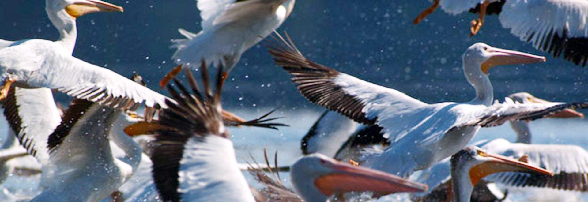 Le grandi migrazioni degli animali