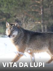 Vita da lupi