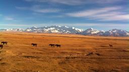 Kazakistan - Il grande Maral