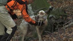 Il cane da beccaccia