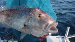 I marlin di San Salvador